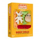 Body Cells box