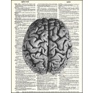 Brain Dictionary Print