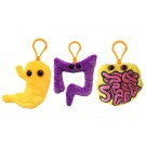 Stomach Colon Intestine Mini 3-pack