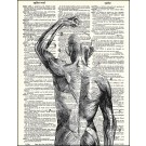 Muscles Dictionary Print