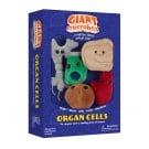 Organ Cells thumbnail