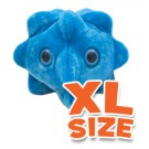 Common Cold (Rhinovirus) XL Size