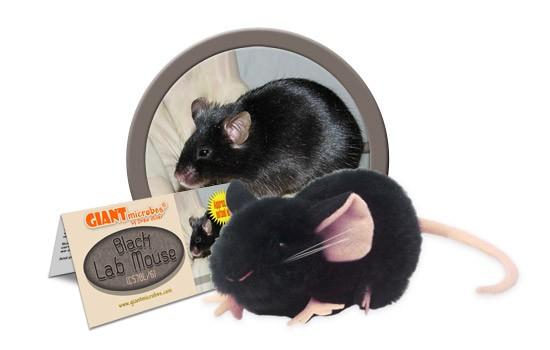 Black Lab Mouse (C57BL/6)
