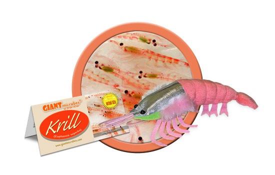 Krill (Euphausia superba)