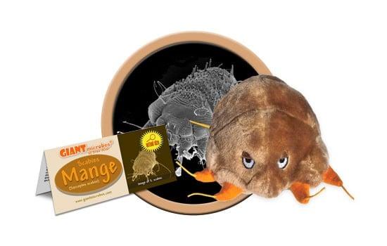 Mange (Sarcoptes scabiei)