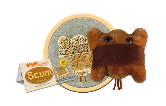 Scum (Biddulphia)