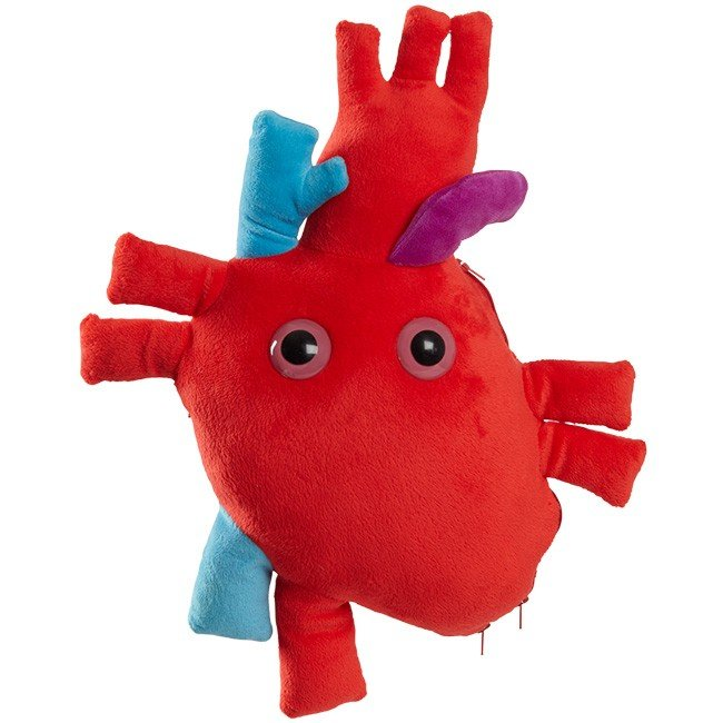 Heart (Heart organ) XL Size with Minis