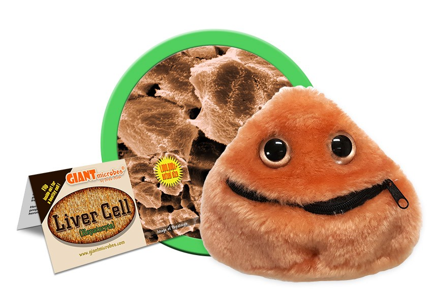 Liver Cell doll outside
