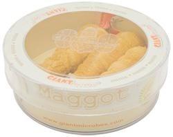 Maggot (Lucilia sericata) Petri Dish