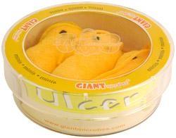 Ulcer (Helicobacter pylori) Petri Dish
