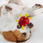 COVID-19 Dog Toy