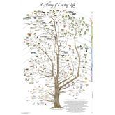 History of Life Poster