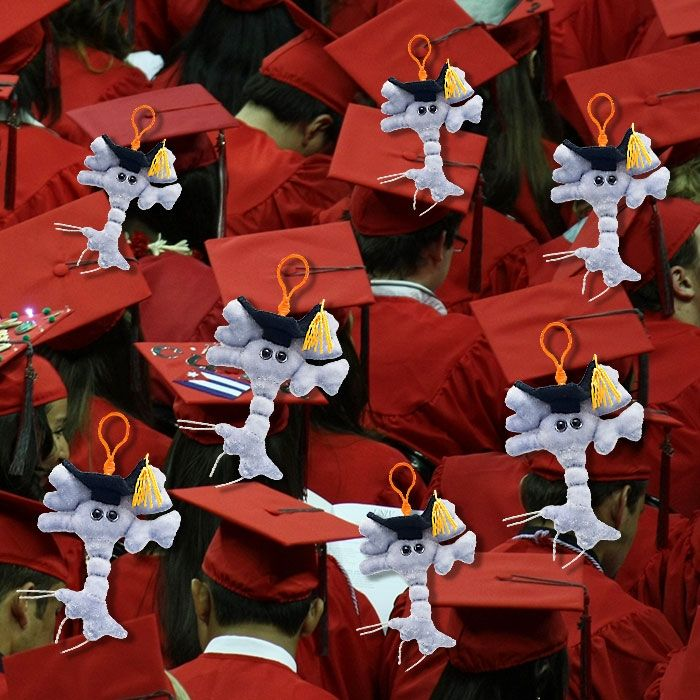 Graduation Brain keychains