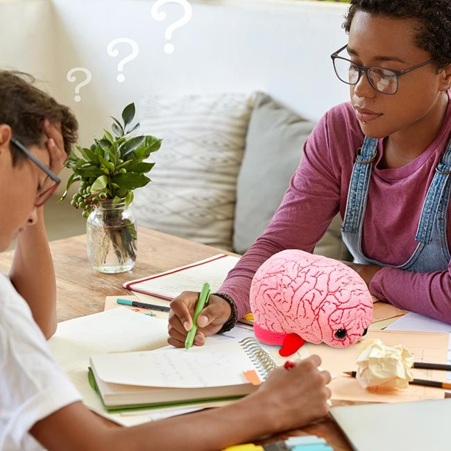 Brain problem solving