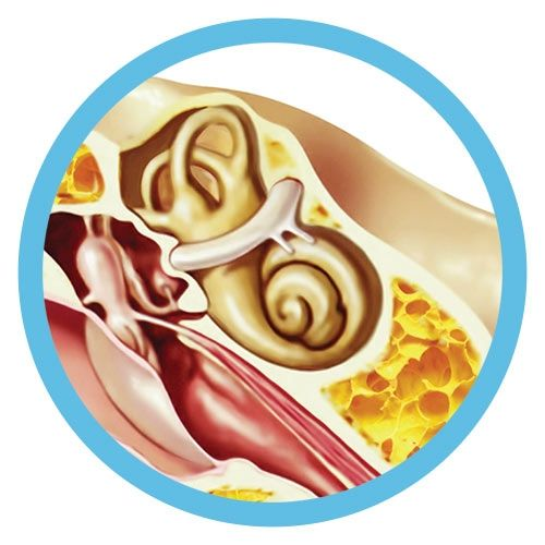 Inner Ear real image