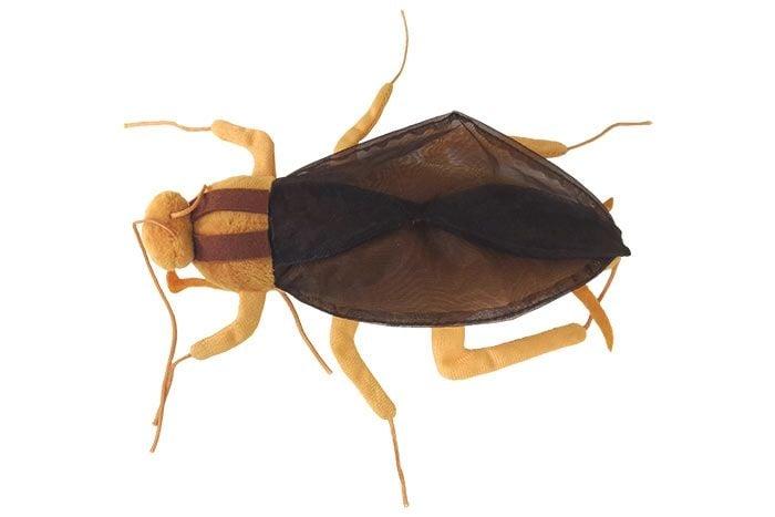 Cockroach top