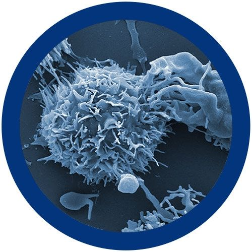 Colorectal Cancer microbial