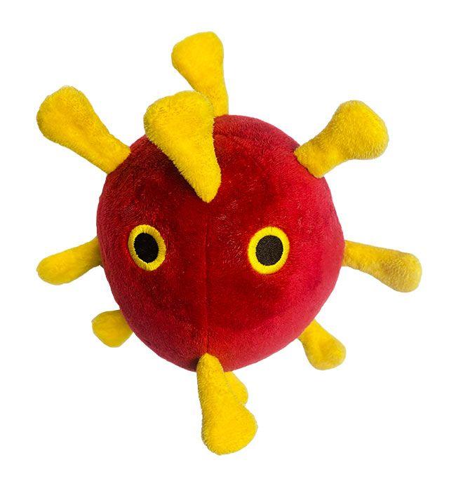 Coronavirus dog top view