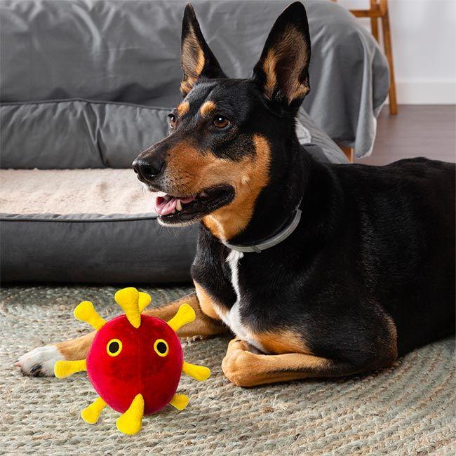 COVID Dog toy resting