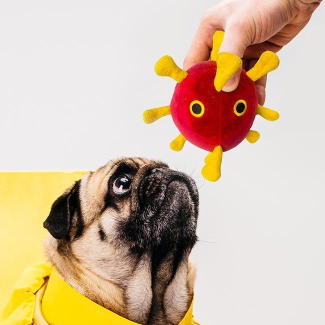 COVID Dog toy treat