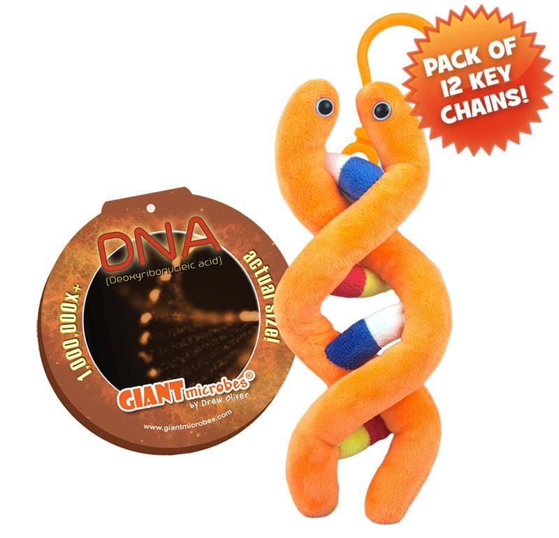 DNA key chain 12 pack