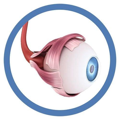 Eyeball real image
