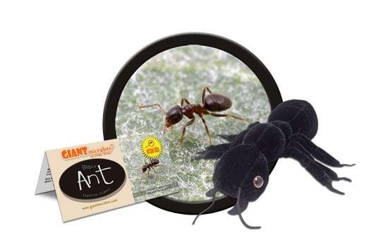 Black Ant cluster