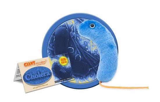 Cholera cluster