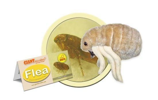 Flea cluster