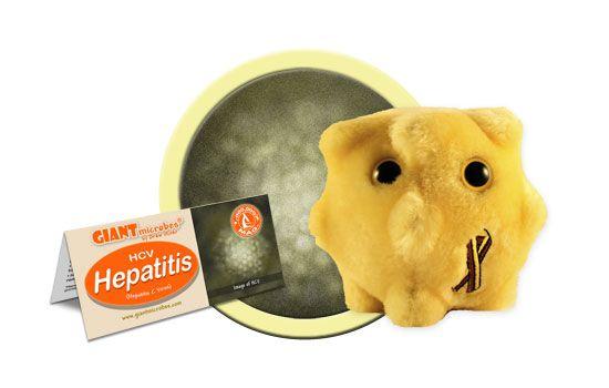 Hepatitis cluster