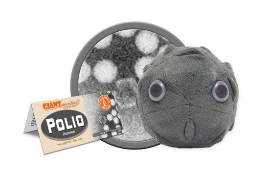 Polio cluster