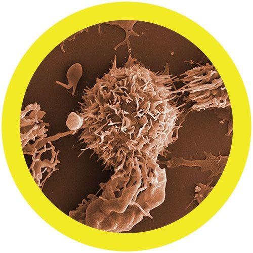 Leukemia microbial