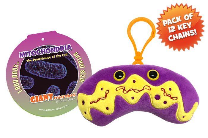 Mitochondria key chain pack