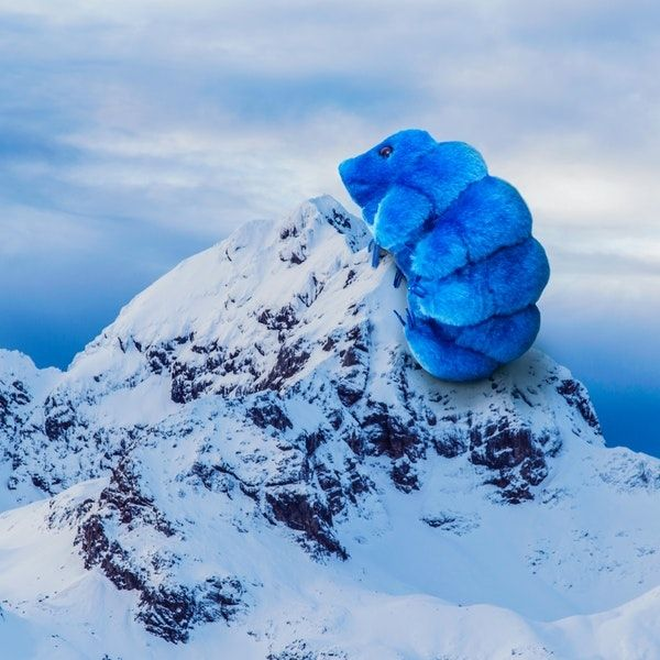 Waterbear mountain