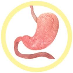 Stomach Colon Intestine Mini 3-pack under a microscope!